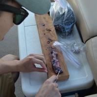 preparing some bait