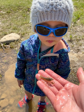 Catching crayfish